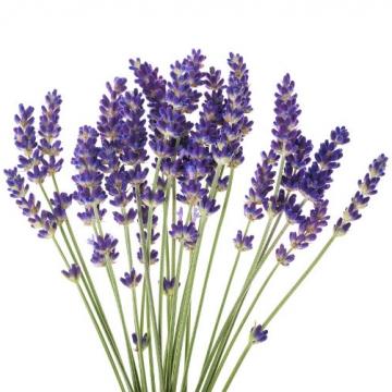 lavender_essential_oil__manufacturer_distributor_supplier_exporter_wholesalers_in_kannauj_kanpur_delhi_mumbai_india